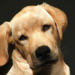 How Burlington Estate Planning Lawyers Can Help You Protect Your Pets